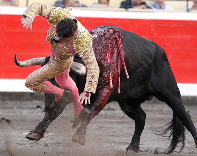 córneo dama duro en Albacete